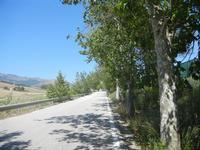 strada alberata - 27 maggio 2012  - Segesta (287 clic)