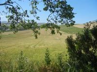 panorama agreste - 27 maggio 2012  - Segesta (324 clic)
