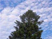 albero e nuvole - 19 settembre 2012  - Alcamo (343 clic)