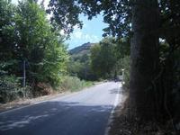 sulla strada per Calatafimi - 2 settembre 2012   - Calatafimi segesta (449 clic)