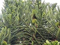 cima d'albero - 19 settembre 2012  - Alcamo (295 clic)