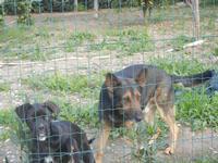 cani oltre la rete - Frazione SALINAGRANDE - 15 gennaio 2012  - Trapani (428 clic)