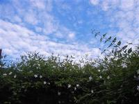 gelsomino e nuvole - 19 settembre 2012  - Alcamo (434 clic)