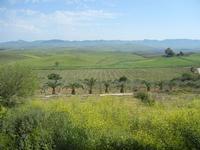SIRIGNANO - Agriturismo - panorama agreste - 1 maggio 2012  - Monreale (848 clic)