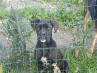 cane oltre la rete - Frazione SALINAGRANDE - 15 gennaio 2012  - Trapani (446 clic)