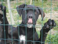 cane oltre la rete - Frazione SALINAGRANDE - 15 gennaio 2012  - Trapani (389 clic)