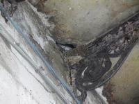 rondine e nido - 19 settembre 2012  - Castellammare del golfo (245 clic)