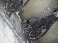 rondini e nidi - 19 settembre 2012  - Castellammare del golfo (271 clic)