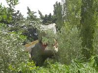 BIOPARCO di Sicilia - dinosauri - 17 luglio 2012  - Villagrazia di carini (400 clic)
