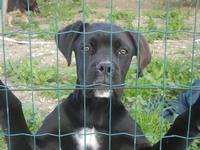cane oltre la rete - Frazione SALINAGRANDE - 15 gennaio 2012  - Trapani (439 clic)