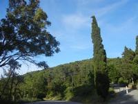 R.N.O. Bosco d'Alcamo - Monte Bonifato (230 clic)