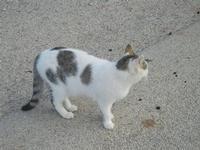 gatto - Frazione SALINAGRANDE - 15 gennaio 2012  - Trapani (465 clic)