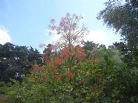 BIOPARCO di Sicilia - 17 luglio 2012  - Villagrazia di carini (284 clic)