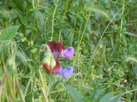 orchidea selvatica - R.N.O. Bosco d'Alcamo - Monte Bonifato (255 clic)