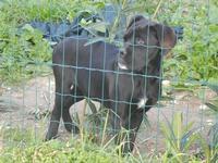 cane oltre la rete - Frazione SALINAGRANDE - 15 gennaio 2012  - Trapani (408 clic)