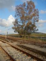 ex stazione ferroviaria binario, marciapiedi e panorama - 4 marzo 2012  - Bruca (1016 clic)
