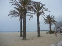 palme sulla spiaggia - 29 aprile 2012  - San vito lo capo (328 clic)