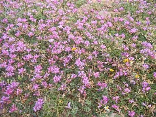 prato di fiori lilla - TERRASINI - inserita il 07-Jul-14
