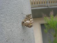 farfalla - 21 maggio 2012  - Alcamo (319 clic)