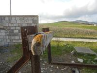 ex stazione ferroviaria binario morto e panorama - 4 marzo 2012  - Bruca (1108 clic)