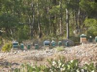 alveari - al limite del bosco - 15 agosto 2012  - Alcamo (333 clic)