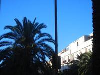 Viale Italia - le palme - 3 settembre 2012  - Alcamo (410 clic)