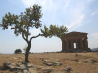 Tempio della Concordia  - Agrigento (2996 clic)