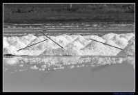 Sale in fase di raccolta nelle saline di Trapani.  - Trapani (3761 clic)