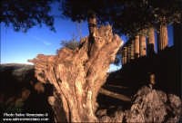 Valle dei Templi  - Agrigento (1906 clic)