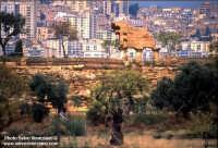 Valle dei templi  - Agrigento (2214 clic)