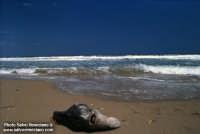 delfino spiaggiato  - Siculiana marina (9229 clic)