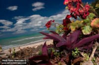 - Siculiana marina (7131 clic)
