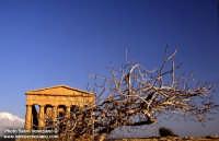 Valle dei Templi  - Agrigento (3689 clic)