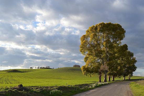Paesaggio vicino Grammichele - GRAMMICHELE - inserita il 09-Feb-15