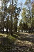 Area boschiva Marineo-Cozzarelli   - Mineo (1819 clic)