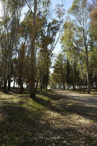 Area boschiva Marineo-Cozzarelli - MINEO - inserita il 22-Dec-14
