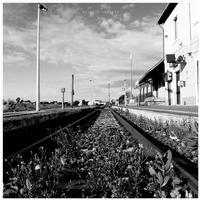 La stazione di Grammichele (1425 clic)