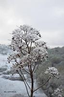 La neve in Sicilia-Epifania 2017 (491 clic)