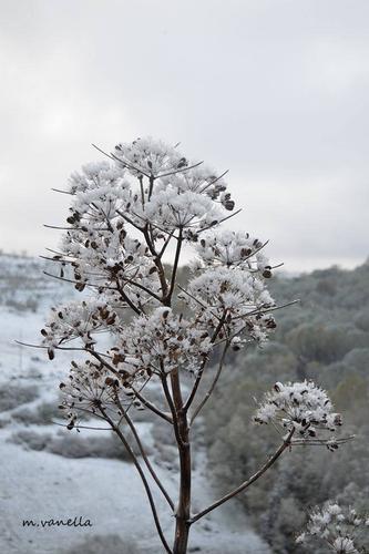 La neve in Sicilia-Epifania 2017 -  - inserita il 10-Feb-17