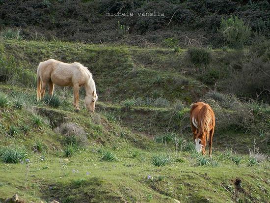 Cavalli nei pressi del bosco del Vaito - GRANIERI - inserita il 19-Jan-15