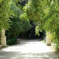 Il mio angolo di paradiso terrestre: l'orto botanico.  PALERMO Paola Porcello