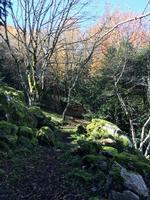 Parco dei Nebrodi, bosco tassita.  CAI   - Caronia (1445 clic)