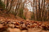 Parco dei Nebrodi, bosco tassita. CAI I monti Nebrodi assieme alle Madonie e ai Peloritani costituiscono l'Appennino Siculo.  - Caronia (2153 clic)