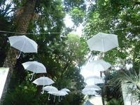 La magica fiera della zagara presso l'orto botanico.  PALERMO Paola Porcello