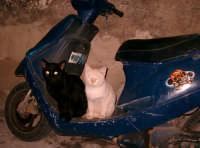 Quartiere Pizzo, anche i gatti si adeguano agli spazi!  - Modica (2833 clic)