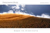 Dopo la mietitura  - Caltanissetta (3808 clic)