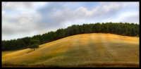 l'oro di sicilia   - Caltanissetta (4043 clic)