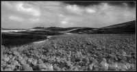 terra bruciata  - Caltanissetta (3608 clic)