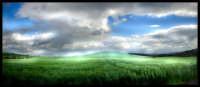 i colori del grano  - Caltanissetta (4390 clic)