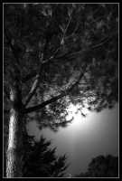il pino e la luna  - Caltanissetta (3587 clic)